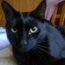 Zaginął czarny kot w Zabrzu.
