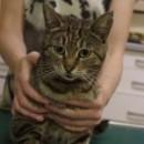 Pilnie szukamy domu tymczasowego dla przemiłej koteczki!