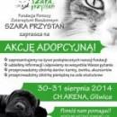 Kolejna akcja adopcyjna Fundacji