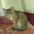 Kolejna kotka potrzebuje tymczasowego schronienia.