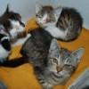 Kociaki w tragicznym stanie poszukują domu tymczasowego!
