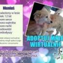 Prosimy o adopcje wirtualne. To dla naszych podopiecznych ogromna pomoc!