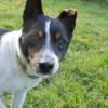 Adopcja starszego psa- z czym to się je?