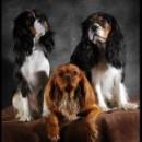 Szkolenie dla psów – oferta specjalna dla podopiecznych fundacji!