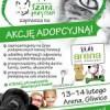 Akcja adopcyjna. Zapraszamy!