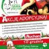 Świąteczna akcja adopcyjna w C.H. Auchan w Zabrzu.