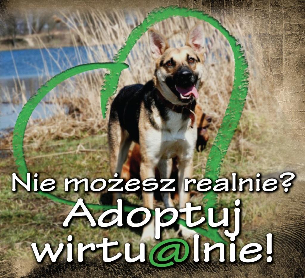 adopcja-wirtualna_www3-1024x933