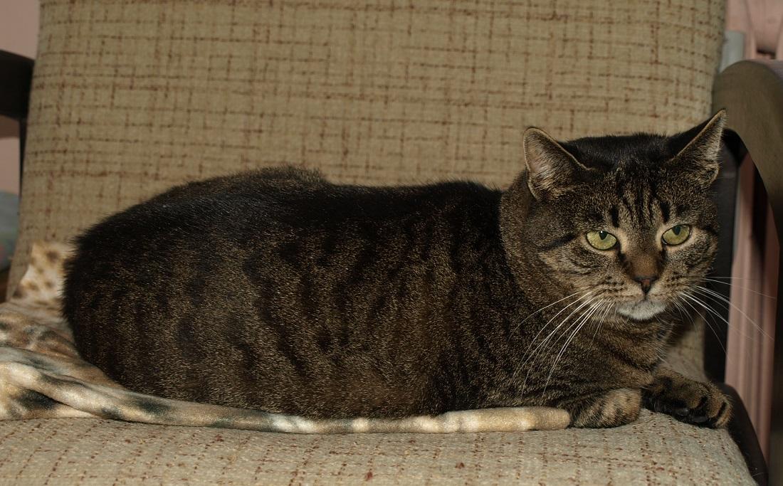 ChudówBędzin-koty-003